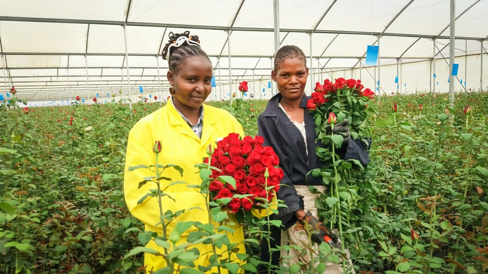 Porini Flowers behaalt Fairtrade certificering